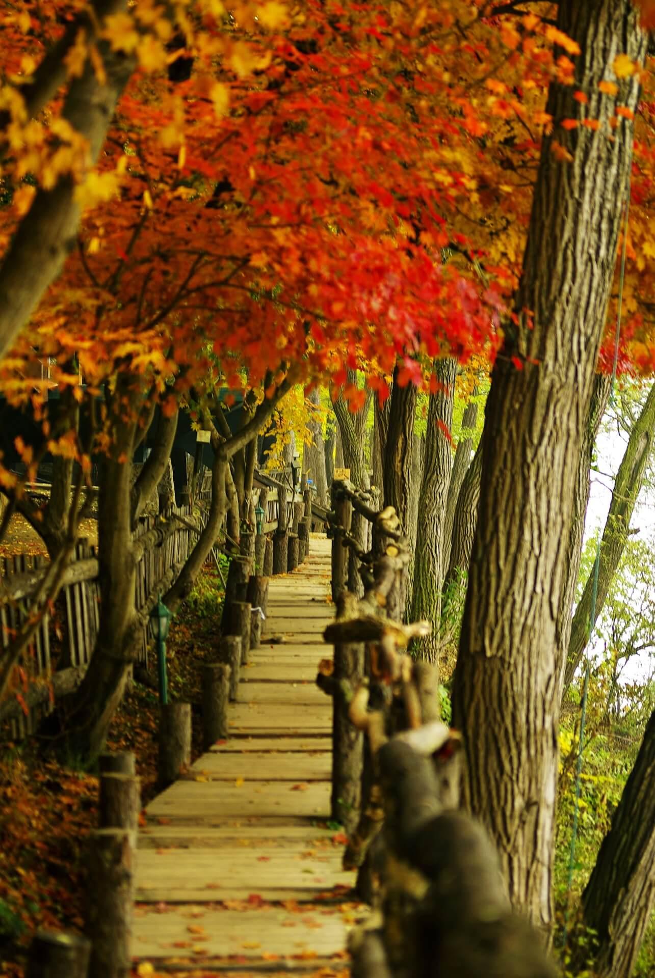 Đảo Nami thơ mộng - Tour du lịch Hàn Quốc