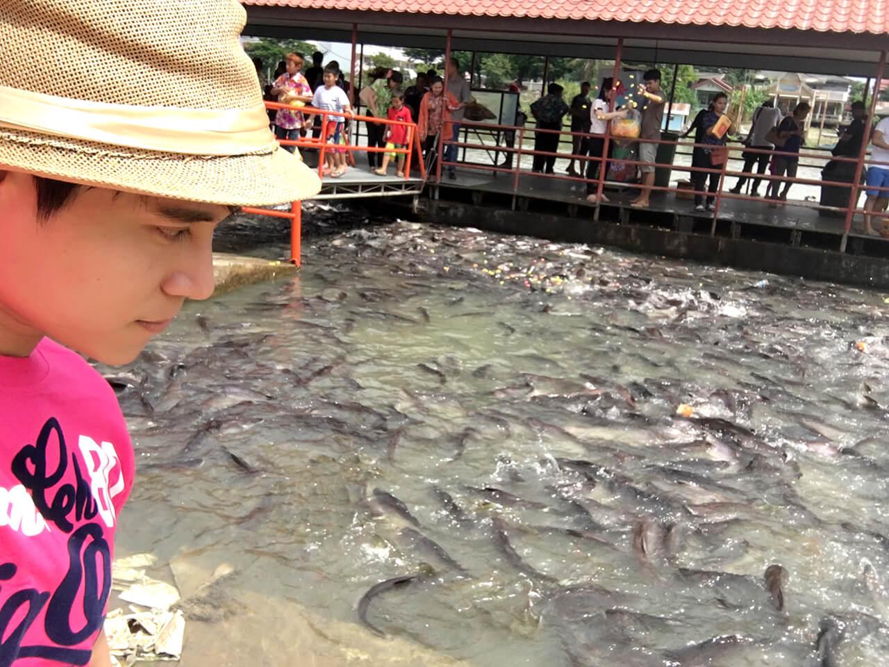 Khám phá những mùa lễ hội trong năm của Thái Lan - Lễ hội phóng sanh tại Ayutthaya