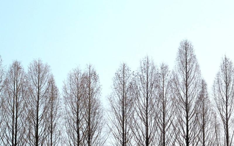 Những rừng cây trụi lá khẳng khiu đứng buồn thiu giữa đất trời