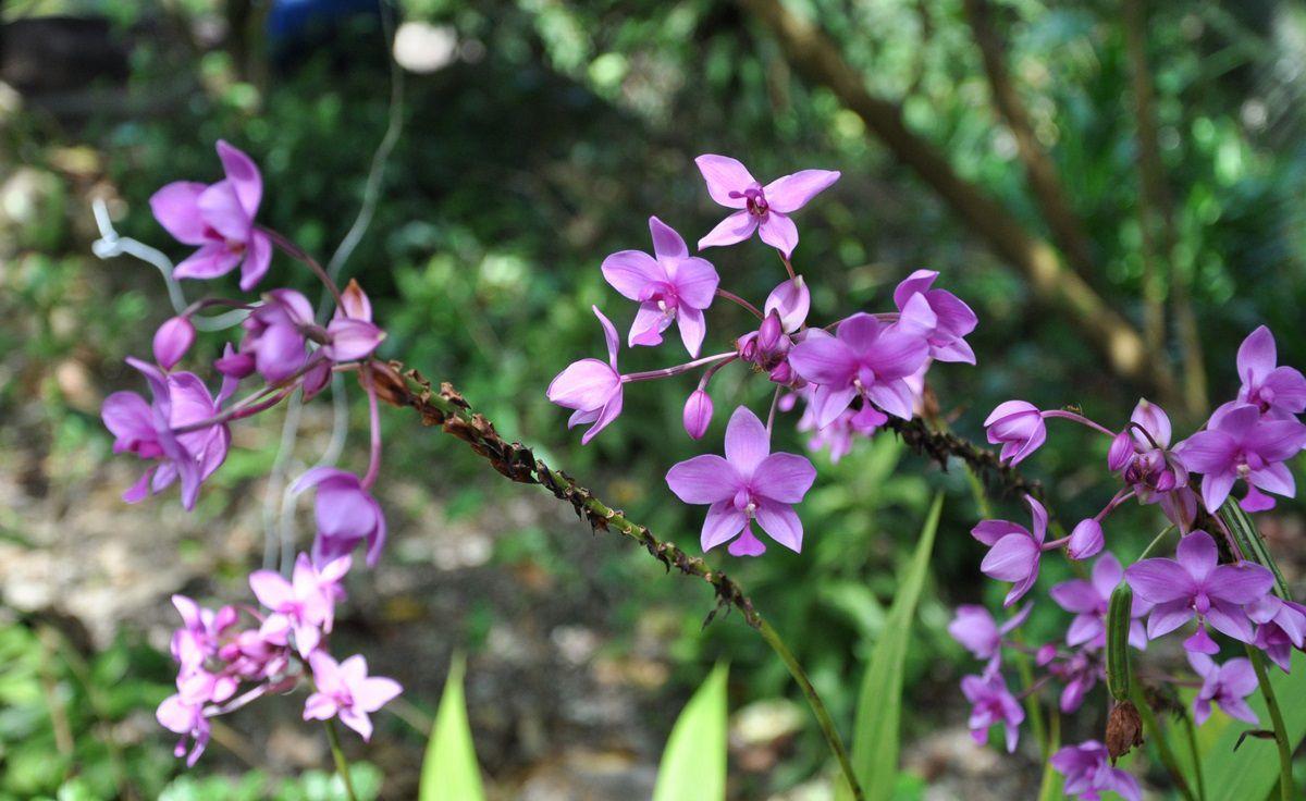 Vườn Sim Phú Quốc - du lịch cùng Vinatravel