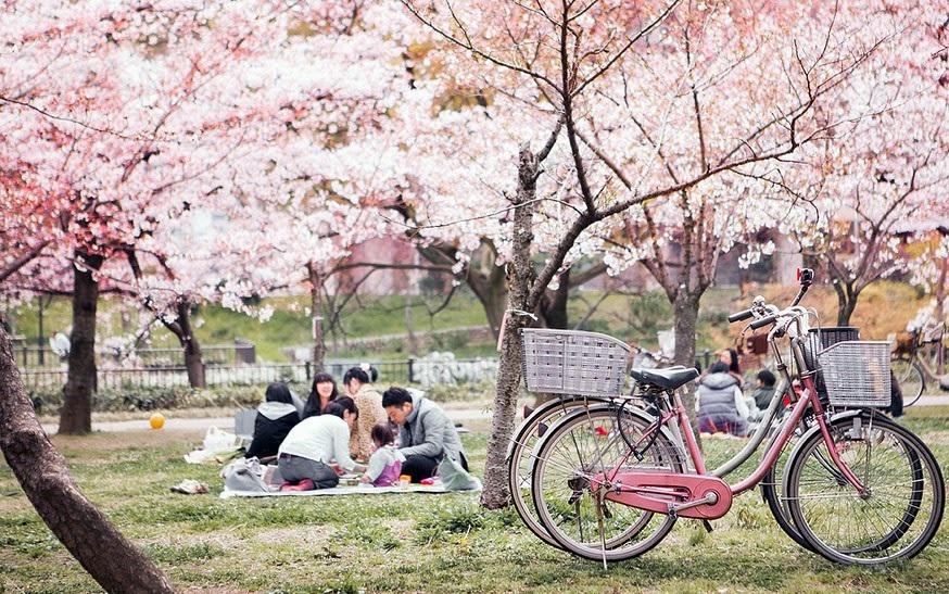 Lễ hội hoa Hanami là quốc lễ được mong chờ nhất trong năm
