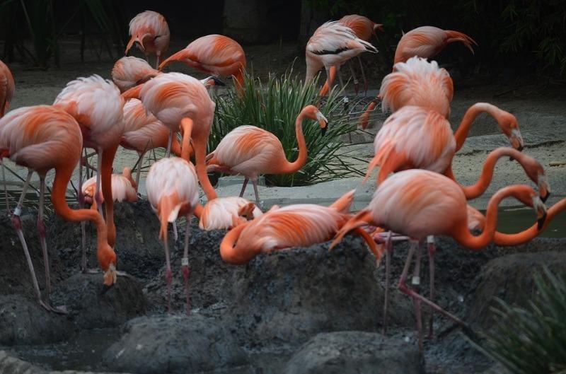 Những chú chim hồng hạc nơi vườn cổ tích này có làm bạn ngẩn ngơ ngắm nhìn? điểm đến thú vị ở San Diego