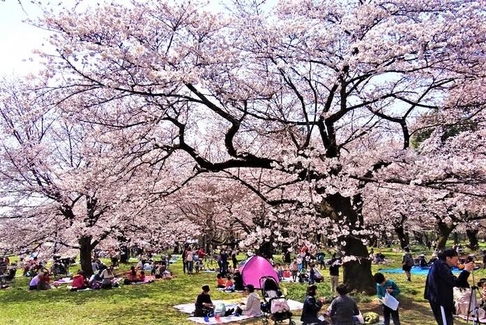 Trải nghiệm lễ hội trọn vẹn bẳng một cách văn minh bạn nhé! khám phá lễ hội mùa xuân trên nước Nhật