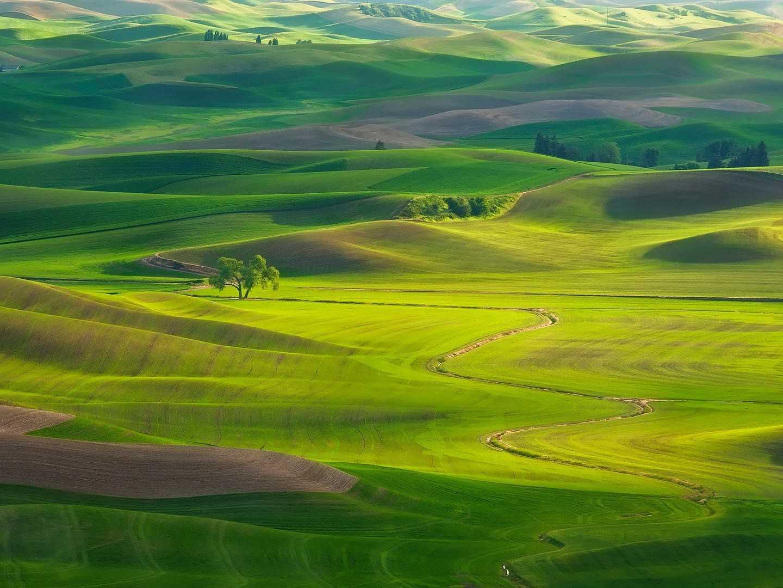 Trùng điệp những ngọn đồi xanh xanh