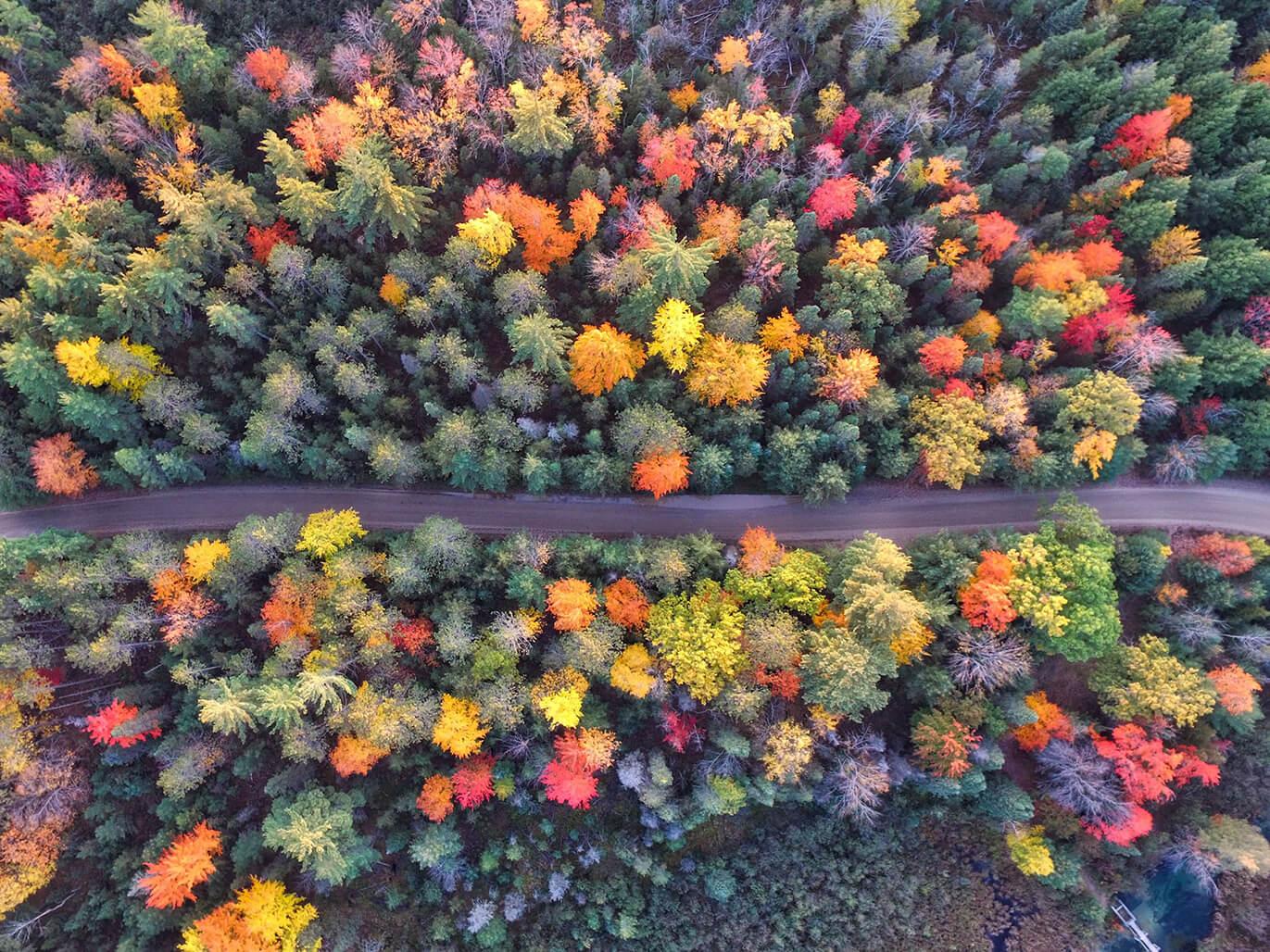 Mùa thu ở nước Mỹ
