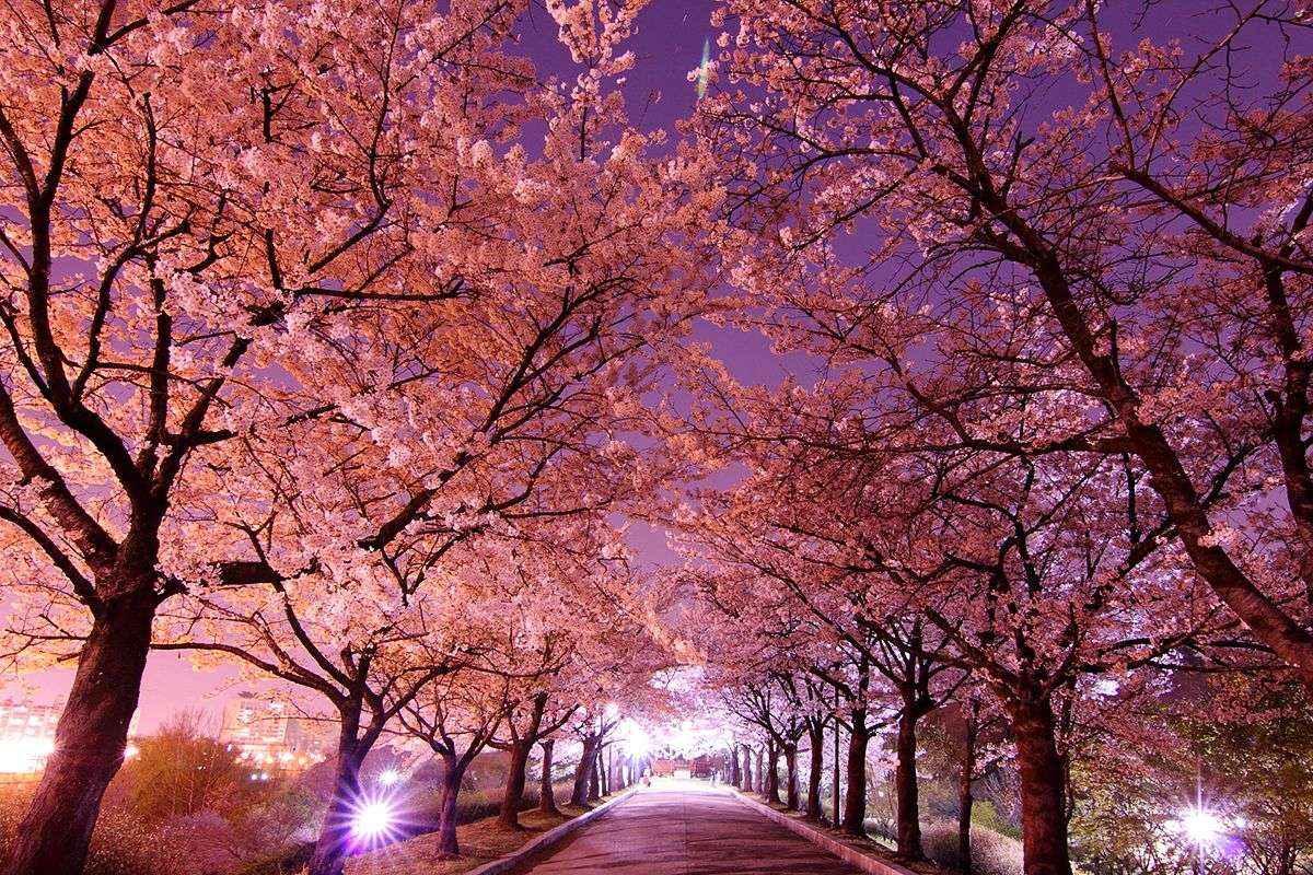 Không khí Hàn Quốc vào mùa xuân