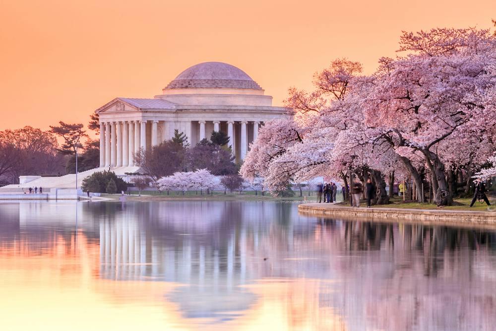 Hoa anh đào tuyệt đẹp trên nước Mỹ - nên du lịch nước Mỹ mùa nào