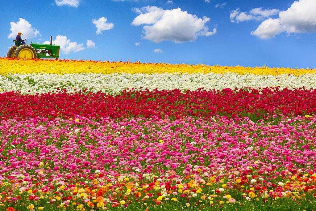 Mùa xuân trên nước Mỹ - nên du lịch nước Mỹ mùa nào
