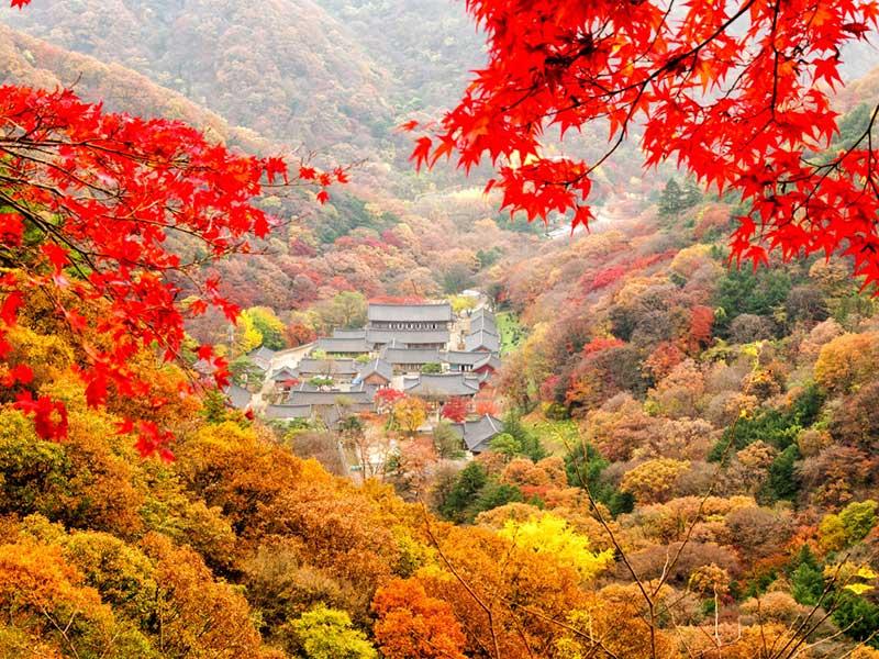 Đất trời Hàn Quốc tràn ngập sắc màu mùa thu