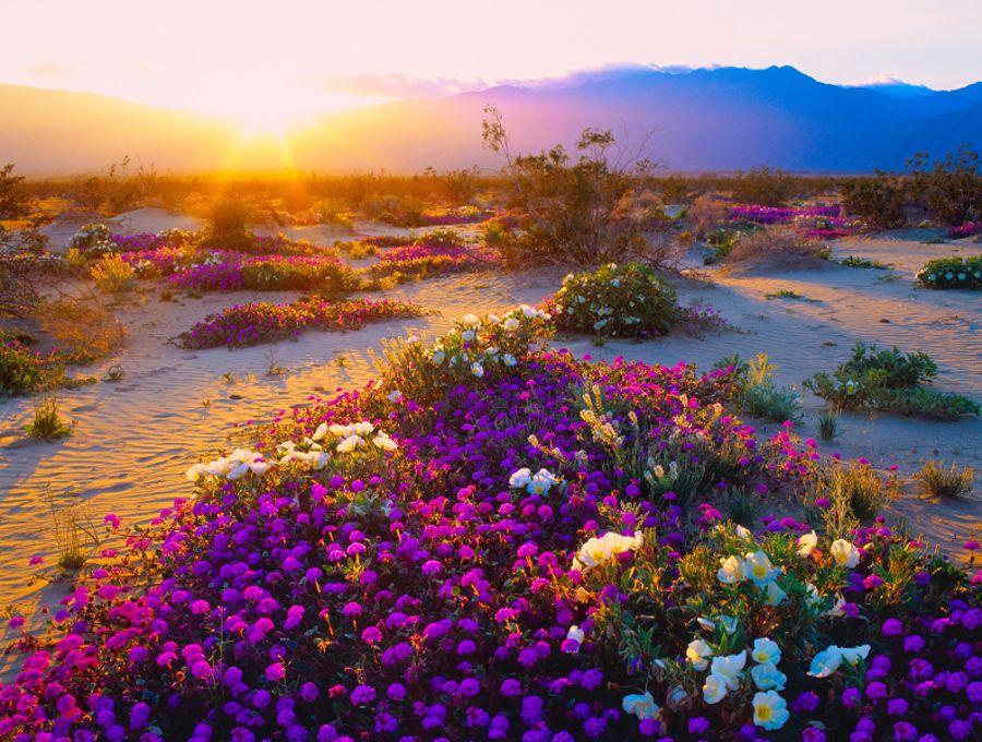 Hoang mạc trên đất Mỹ cũng đẹp lạ lùng như thế